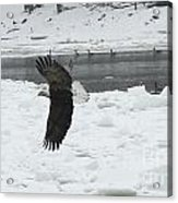 Eagle By River Acrylic Print
