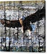 Eagle Imprint Acrylic Print