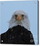 Eagle In The Wind Acrylic Print