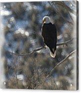 Eagle In Tree 2 Acrylic Print