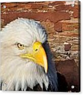 Eagle On Brick Acrylic Print