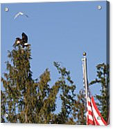 Eagle Rallies Round The Flagpole Acrylic Print