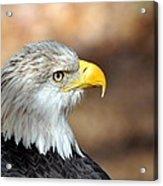 Eagle Right Acrylic Print