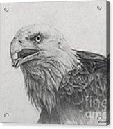 Eagles Quest Acrylic Print