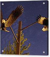 Eagles Suspended Acrylic Print