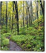 Early Autumn Hike Acrylic Print
