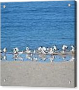 Early Morning Networking Acrylic Print