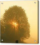 Early Morning Sunshine Acrylic Print