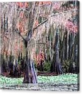 East Texas Acrylic Print