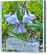 Easter Card - Virginia Bluebells Acrylic Print