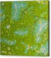 Easter Egg Green Macro 1 Acrylic Print