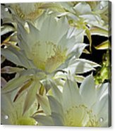 Easter Lily Cactus Bouquet Acrylic Print