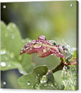 Eau De Vie - S01r03 Acrylic Print by Variance Collections