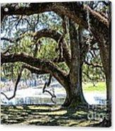 Edge Of The Green Swamp Acrylic Print