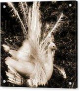 Effervescence IIi  Acrylic Print