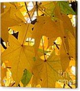 Efx.13 Acrylic Print
