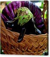 Eggplants From Sicily Acrylic Print