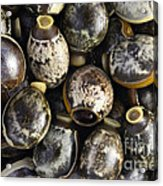 Eggs Of Stick Insect Acrylic Print