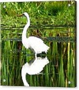 Egret 5 Acrylic Print