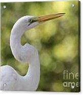 Egret Alphabet Acrylic Print