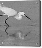 Egret In Black And White   Two Acrylic Print