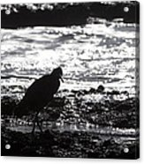 Egret Silhouette  Acrylic Print