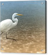 Egret Stroll Acrylic Print