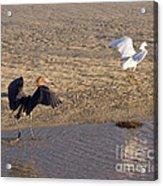 Egret Territory Acrylic Print