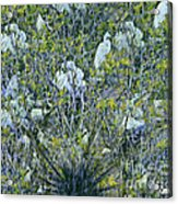 Egrets At Roost Acrylic Print