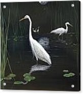Egrets In The Moonlight Acrylic Print