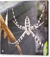 Eight Legged Friend Acrylic Print