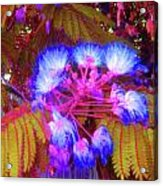Electric Mimosa Acrylic Print by Juliana  Blessington