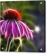 Electrified Coneflower Acrylic Print