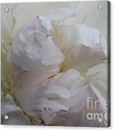 Elegance And Frills Acrylic Print