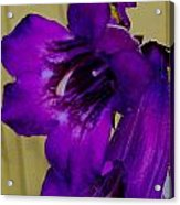 Elegance In Purple Acrylic Print