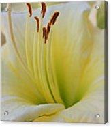 Elegant Beauty 2 Acrylic Print
