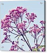 Elegant Pink Flowers. Acrylic Print