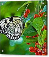 Elegant Rice Paper Butterfly On Berry Tree Acrylic Print