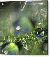 Elemental Acrylic Print by Bill Morgenstern