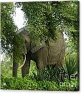 Elephant Beauty Acrylic Print
