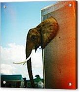 Elephant Box Acrylic Print