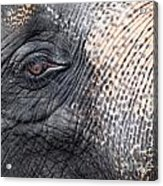 Elephant Close-up Portrait Acrylic Print