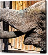Elephant Feeding Time At The Zoo Acrylic Print