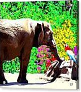Elephant-parrot Dialogue Acrylic Print by Rom Galicia