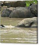 Elephant Pond Mole Park Reserve Ghana Acrylic Print