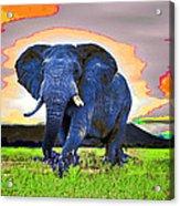 Elephantidae Diurnal Acrylic Print