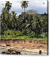 Elephants In The River Acrylic Print