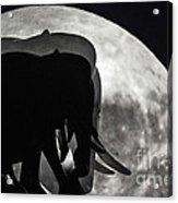 Elephants On Moonlight Walk Acrylic Print