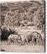 Elephants Walking In A Row Samburu Kenya Acrylic Print