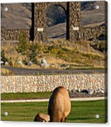 Elk At Yellowstone Entrance Acrylic Print